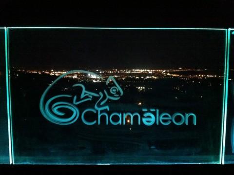 Chamaeleon_Mallorca_1